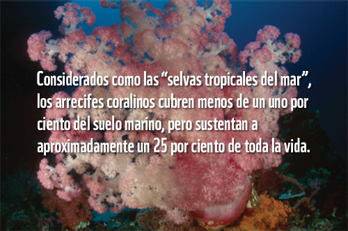 Corales | WWF