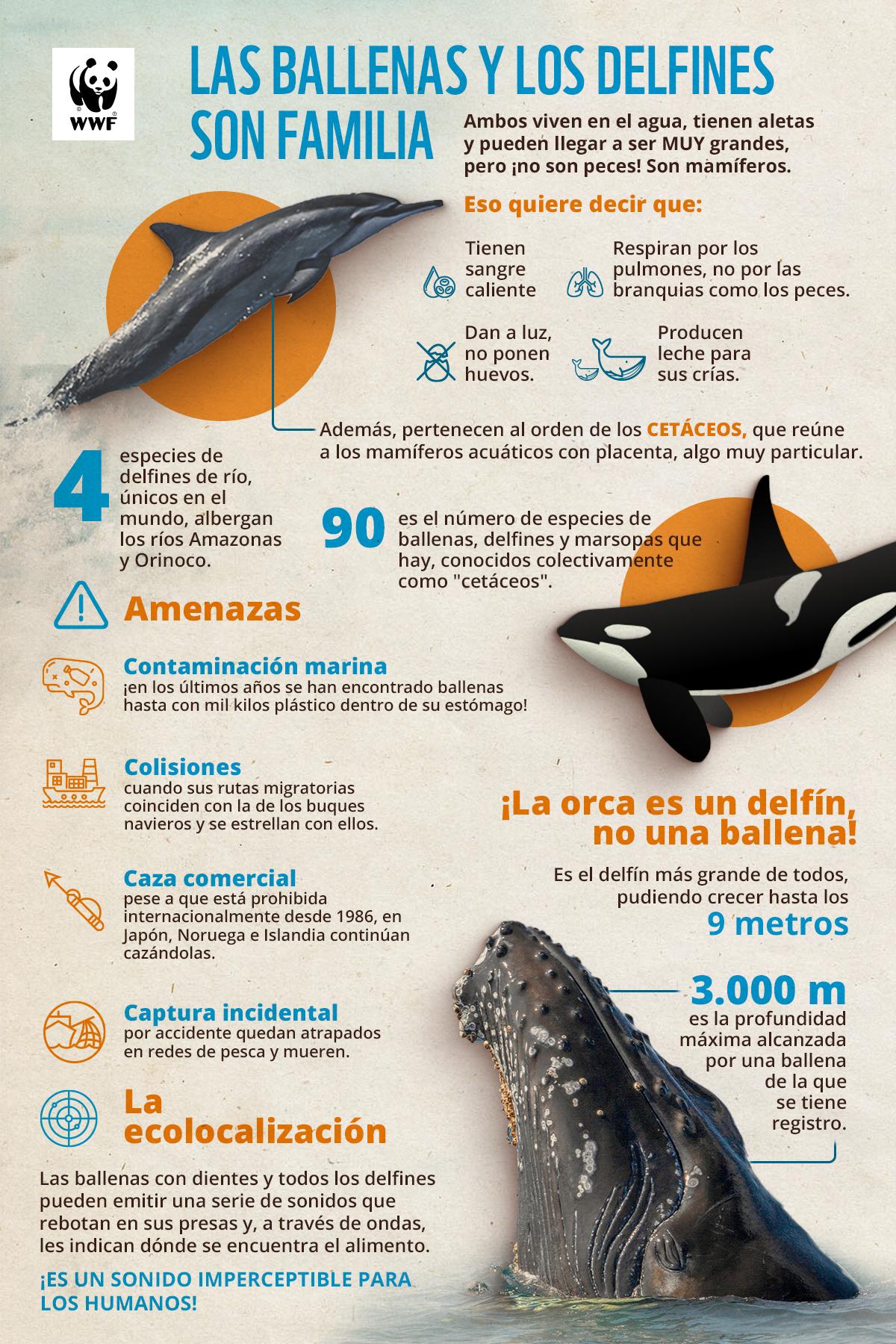 Las Ballenas Y Los Delfines Dos Mamíferos Muy Particulares Wwf